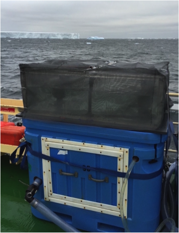 An incubator filled with flowing seawater and covered with screening material to stimulate 33% light level in the ocean. Bottles for my own experiments and for other scientists await filtering.